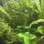水草水槽レイアウトに必要な二酸化炭素(CO2)を添加する