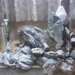 龍王石で湧水レイアウトに挑戦するよ!龍王の湖底